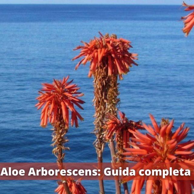 Aloe Arborescens: guida completa