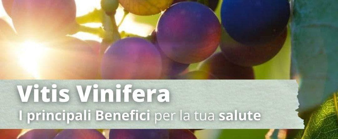 Vitis vinivera: 10 benefici per la tua salute