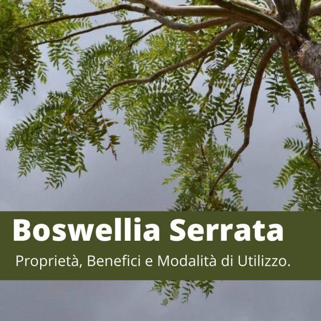 Boswellia serrata: proprietà benefici e utilizzo